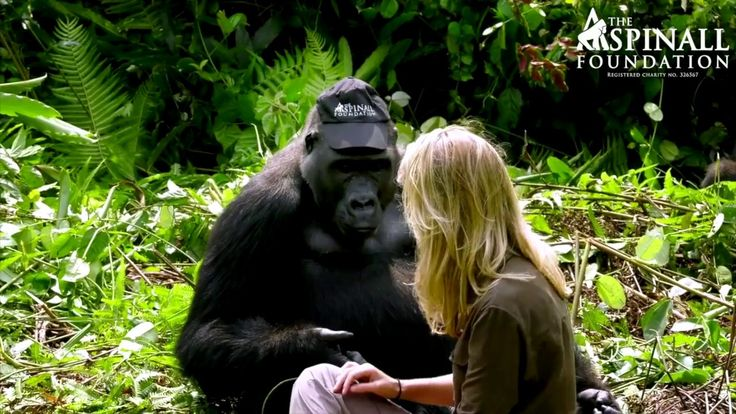 A Heart Warming Moment With Wild Gorillas