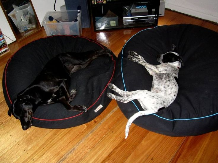 Labrador and Staffy ever so comfy and relaxed on their Barka Parka pet beds. www.barkaparka.com.au