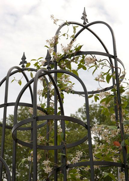 Buy Traditional steel obelisk: Delivery by Waitrose Garden in association with Crocus