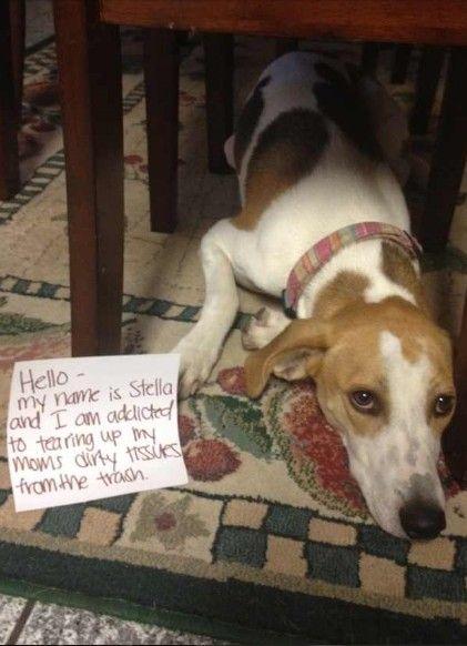 Will Cat Treats Hurt My Dog