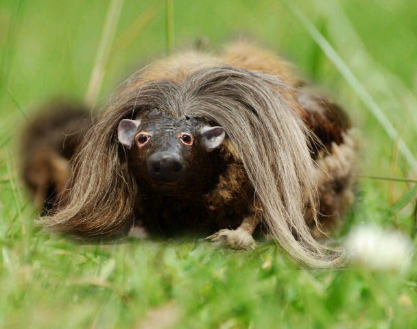 A nippy wee haggis