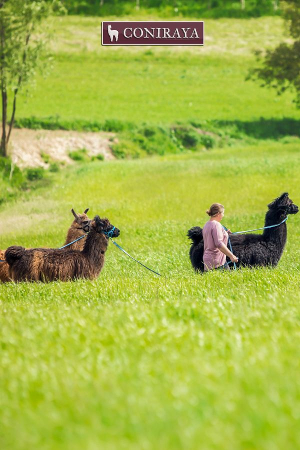 It's a perfect day for a walk with llamas! :) Just visit us! ;)