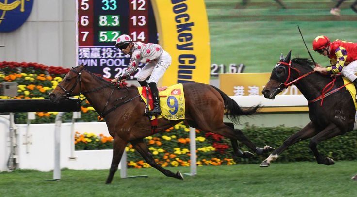 Super Lifeline (AUS) 2009 B.g. (Churchill Downs (AUS)-Regal Contessa (AUS) by King Of Kings (IRE) 1st Hong Kong Macau Trophy (HK-G3,1400m,Sha Tin)