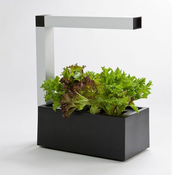 HERBIE Indoor Garden - sisäpuutarha joka viljele kasveja kotona | Tregren Store