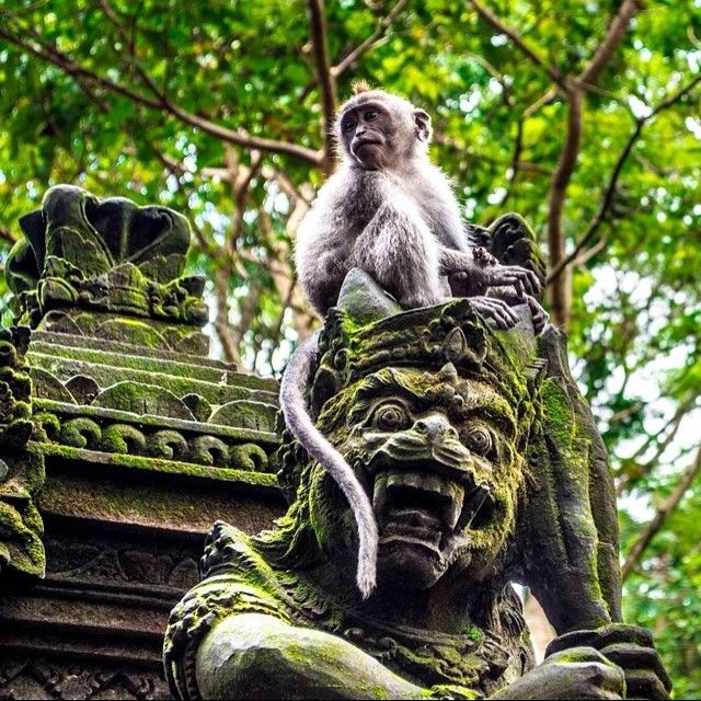 Exploring Monkey Forest Sanctuary in Ubud, Indonesia. Photo courtesy of nodestinations on Instagram.