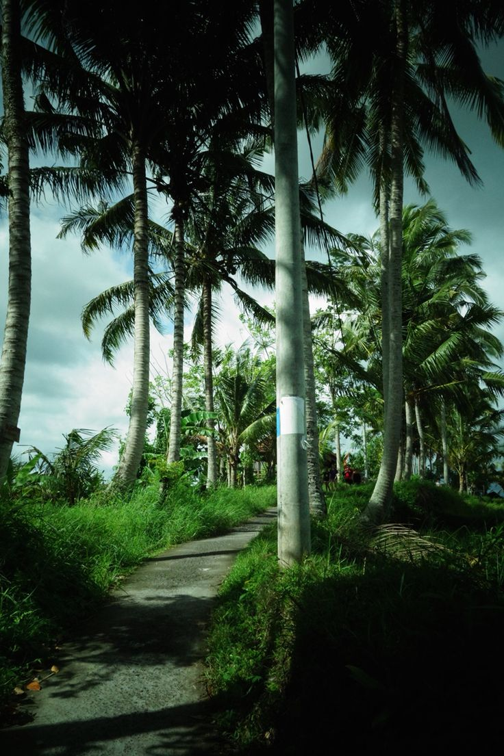 The road to Sari Organic