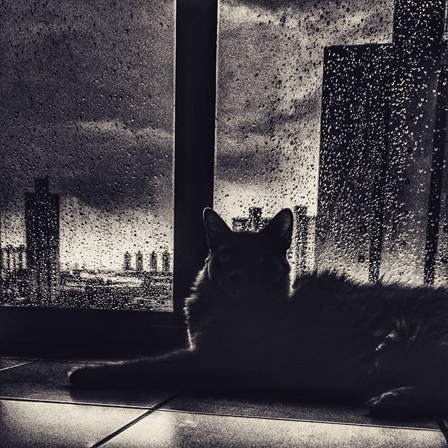 Dia de chuva. #instacat #cats