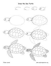 Image result for turtle printing