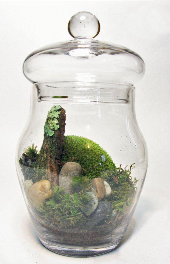 moss and lichen terrarium