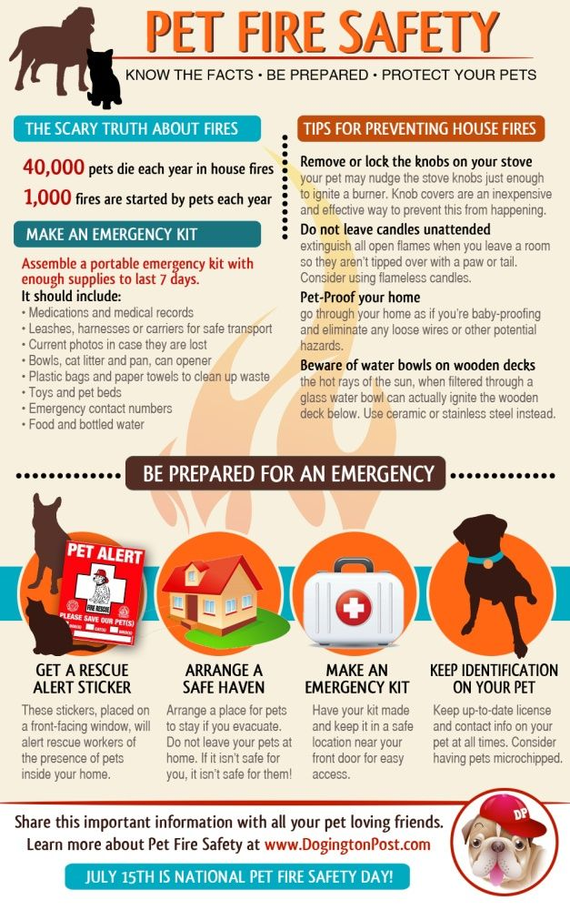 Pet Fire Safety - See more cool puppies & dogs training infographics at TrainMyPuppies.com