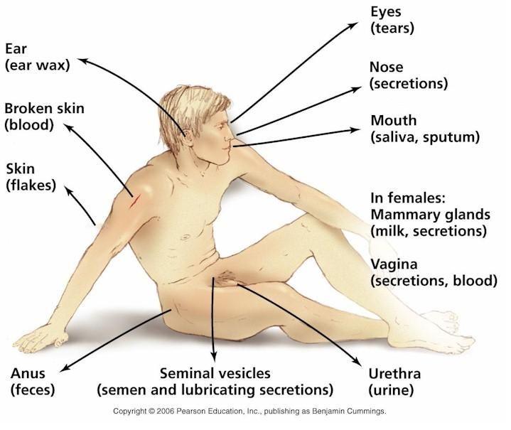 sputum examination | biology 2420 > jackson > flashcards > chapter, Skeleton