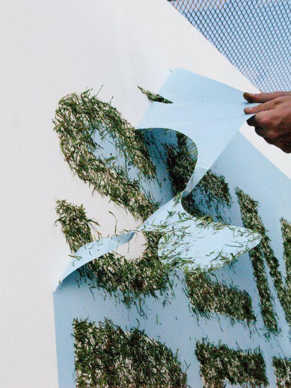 Semilla pero no se toca by Lo Siento , via Behance. # Environmental Graphics