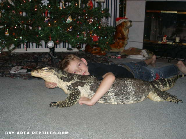 Asian Water Monitor - 6ft long, so kid friendly, lol ...