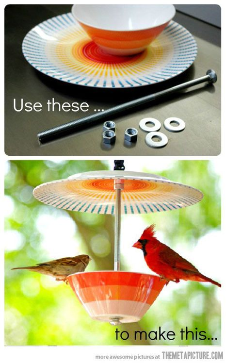 Bird feeder...it would be cool to make two, one for seed, one for water.