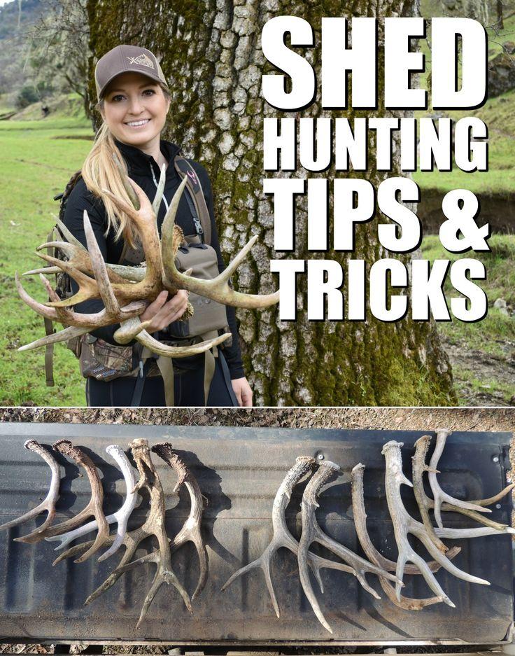 TeamGWG's Whitney Vau & Lea Leggitt share their best tips and tricks for shed hunting deer and elk antlers.