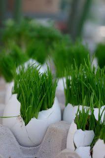 Gräsägg till påsk