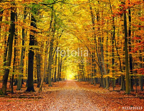 """Download the royalty-free photo """"Pathway in the bright autumn park"""" created by sborisov at the lowest price on Fotolia.com. Browse our cheap image bank online to find the perfect stock photo for your marketing projects!"""