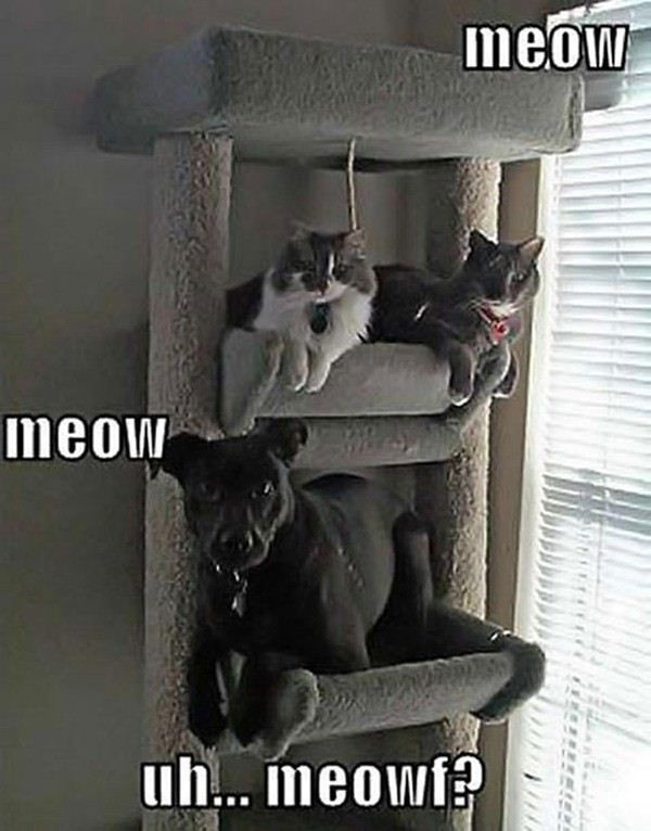 Funny Pictures Of Animals - 20 Pics