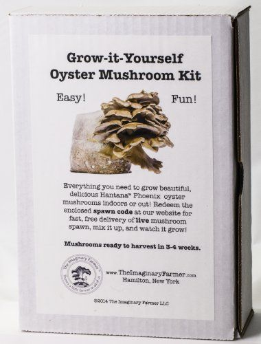 Oyster Mushroom Growing Kit  Premium Edition http://homepatiogarden.net/oyster-mushroom-growing-kit-premium-edition/