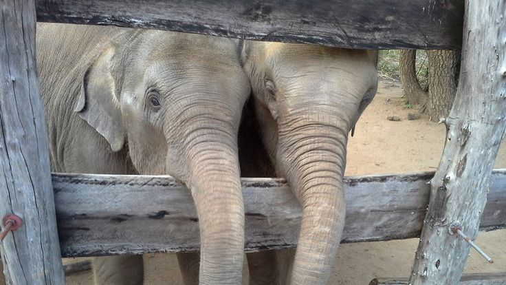 Petition · President of Sri Lanka HE Maithripala Sirisena: FREE THE WILD-BORN RITIGALA ELEPHANT CALVES AT PINNAVALA, SRI LANKA · Change.org