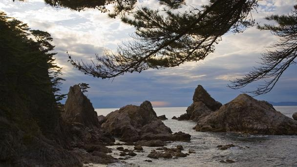 Pine, rock, and water meet along the Sea of Japan,