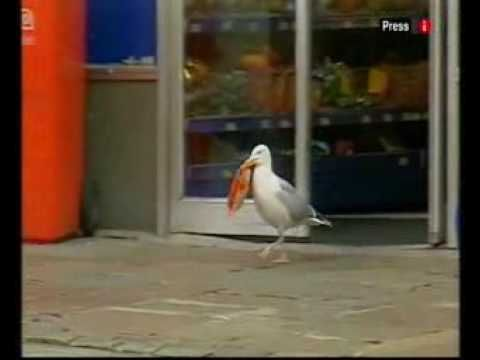 Sam, the shoplifting seagull