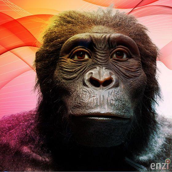 Hominidae: Australopithecus anamensis - 4,4-3,9 myb (pliocen)
