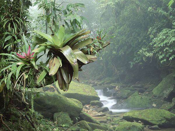 5 Facts about rainforests you didn't know.