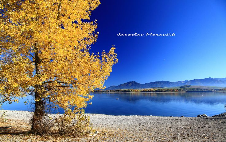 Autumn tree near lake Liptovska Mara, Slovakia