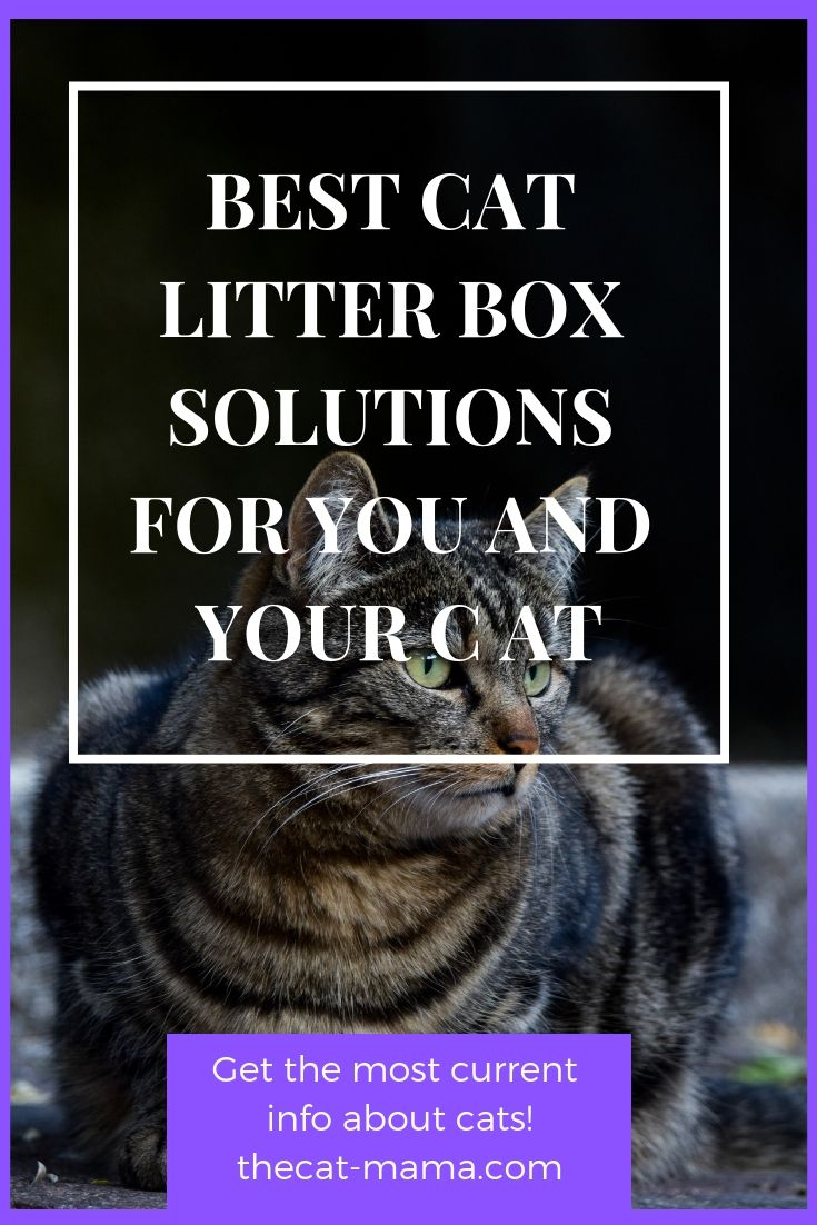 The Best Litter Box For Multiple Cats That Will Make Your Life