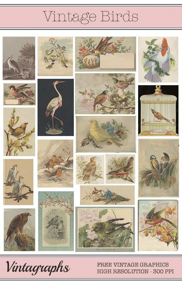 Free vintage birds printables for collage, scrapbooking & more! Commercial Use OK! :)