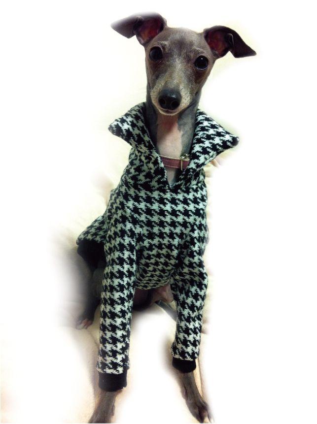 celebdog | Rakuten Global Market: Dog clothes Workshop panel line T shirt & parka Italian Greyhound & whippet size IS &IM