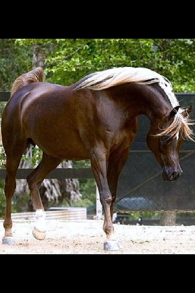 Simeon Sehavi = Stunning!