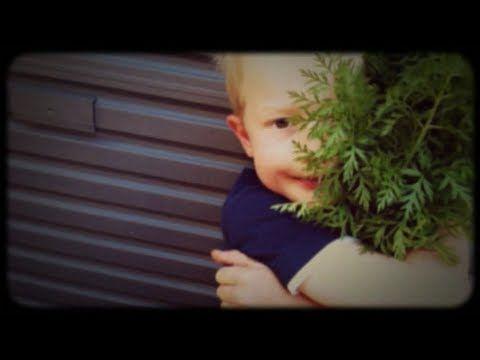 AFreshLegacy_Start to Grow Fresh - YouTube