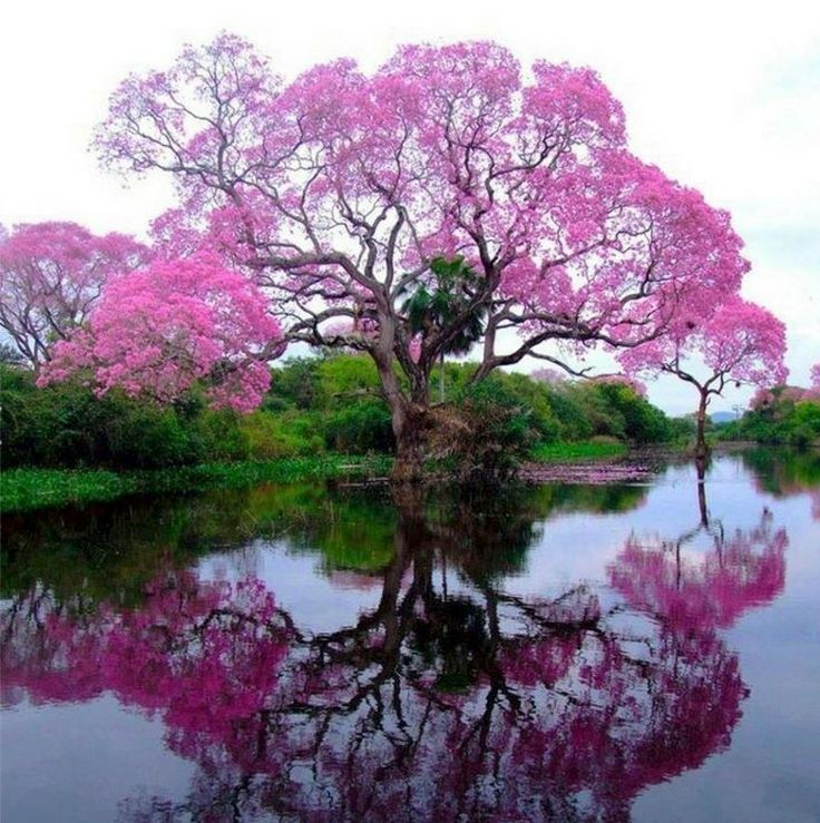 Beautiful Spring Reflections