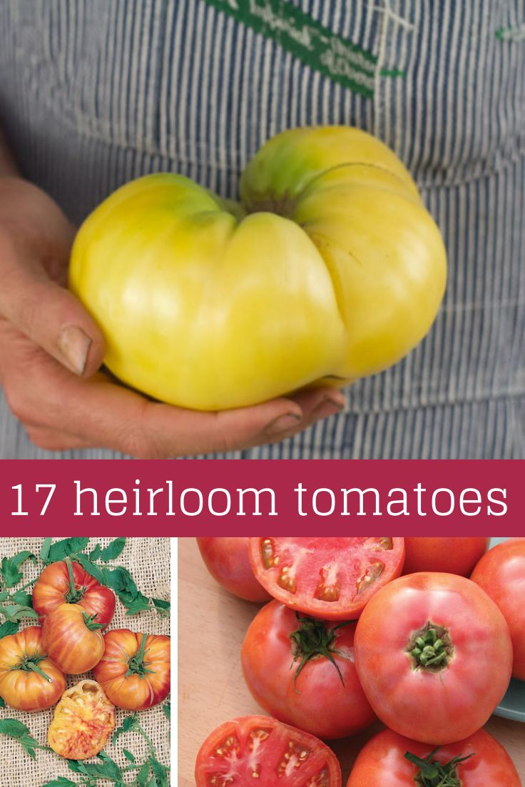 17 Tasty Tomato Varieties To Grow This Spring --> http://www.hgtvgardens.com/tomatoes/delectable-heirloom-tomatoes?soc=pinterest