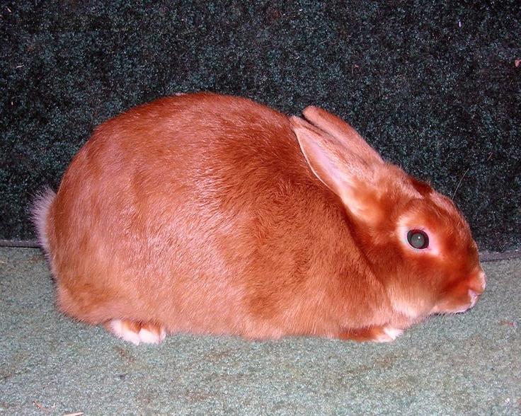 Bread Meat Rabbits Best