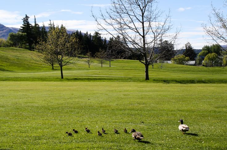 The whole ducklings family is about to tee off on our golf cours at Millbrook