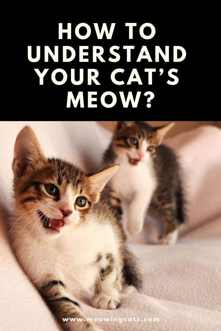 How To Understand The Cat S Meow Cat Behavior Cat Stuff Products Cat Supplies
