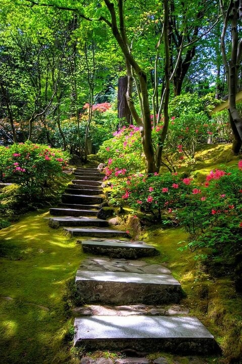 Stair steps through a wooded garden with moss growing on either side.....beautiful spring azaleas bloom...