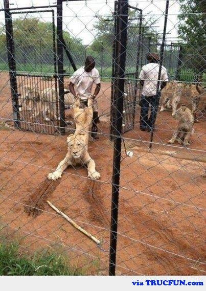 Uniquement en Afrique, trop fort