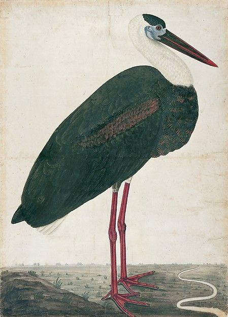 Black Stork in a Landscape, Date: ca. 1780, India, probably Lucknow.  Culture: Colonial British.  Medium: Watercolor on European paper