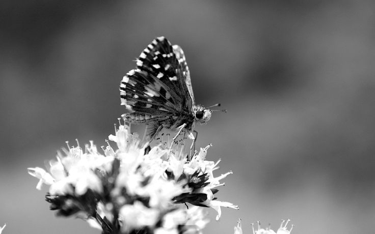 Black and White Nature, Plants and Insects - Public Domain Photos, Free Images for Commercial Use