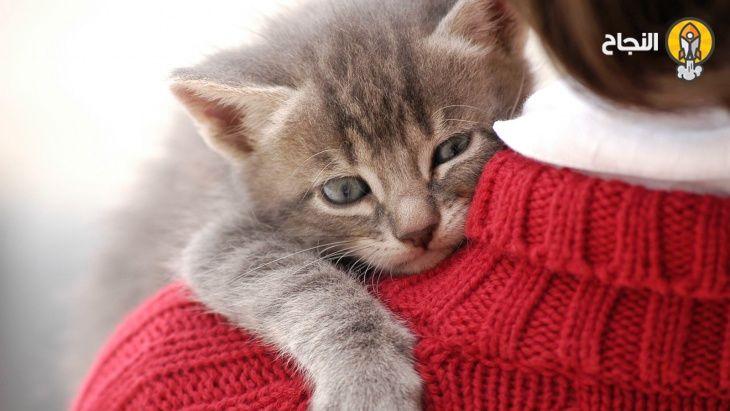 نصائح العناية بالحيوانات المنزلية الأليفة بشكل صحي وآمن Cat Love Cat Names Cats