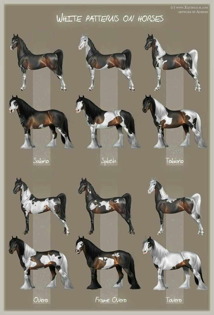 46 best horse color chart images on pinterest color charts white patterns on horses by aomori on deviantart nvjuhfo Choice Image