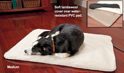 Best 25 Heated Dog Bed Ideas On Pinterest