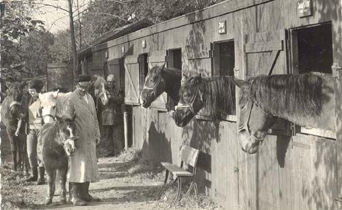 De stallen van de eerste 7 bewoners van De Paardenkamp
