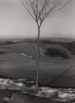 Albert Renger-Patzsch (German, 1897–1966) The Little Tree  Date:     1929 Medium:     Gelatin silver print