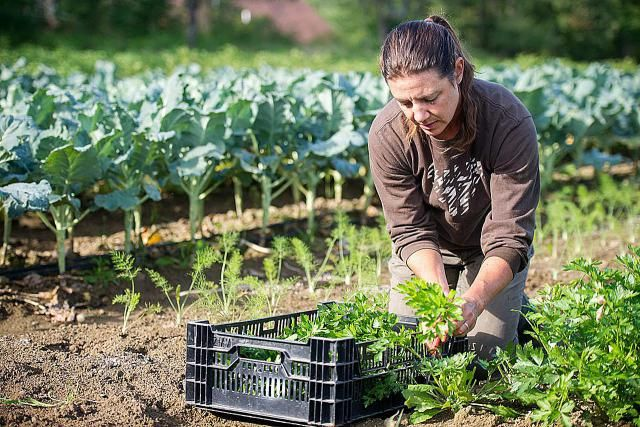 From starting small, to embracing DIY, these top 10 tips provide information and other insights to help you with building your hobby farm.
