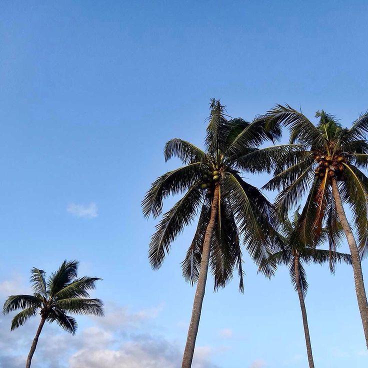 Bali coconut trees 🌴🌴